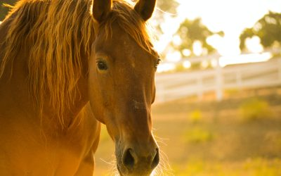 5 Reasons To Vaccinate Your Horse