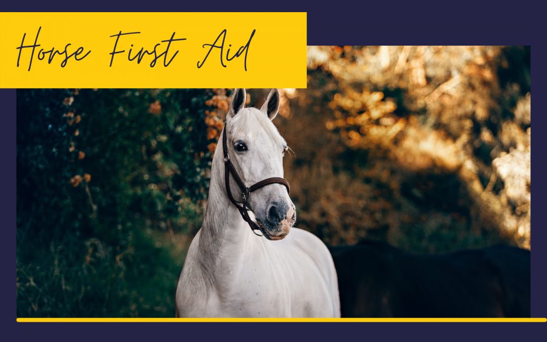 5 Reasons Your Vet Would Love You To Improve Your Horse Anatomy Knowledge