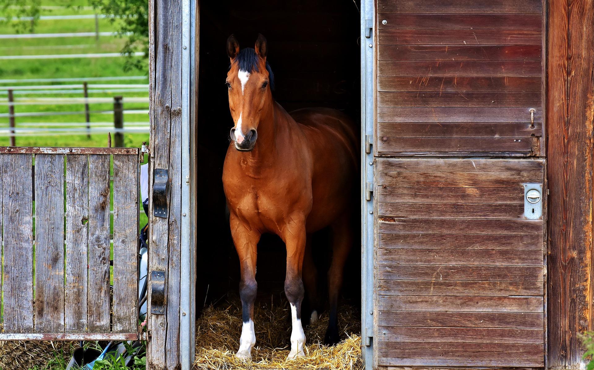 nkc equestrian courses
