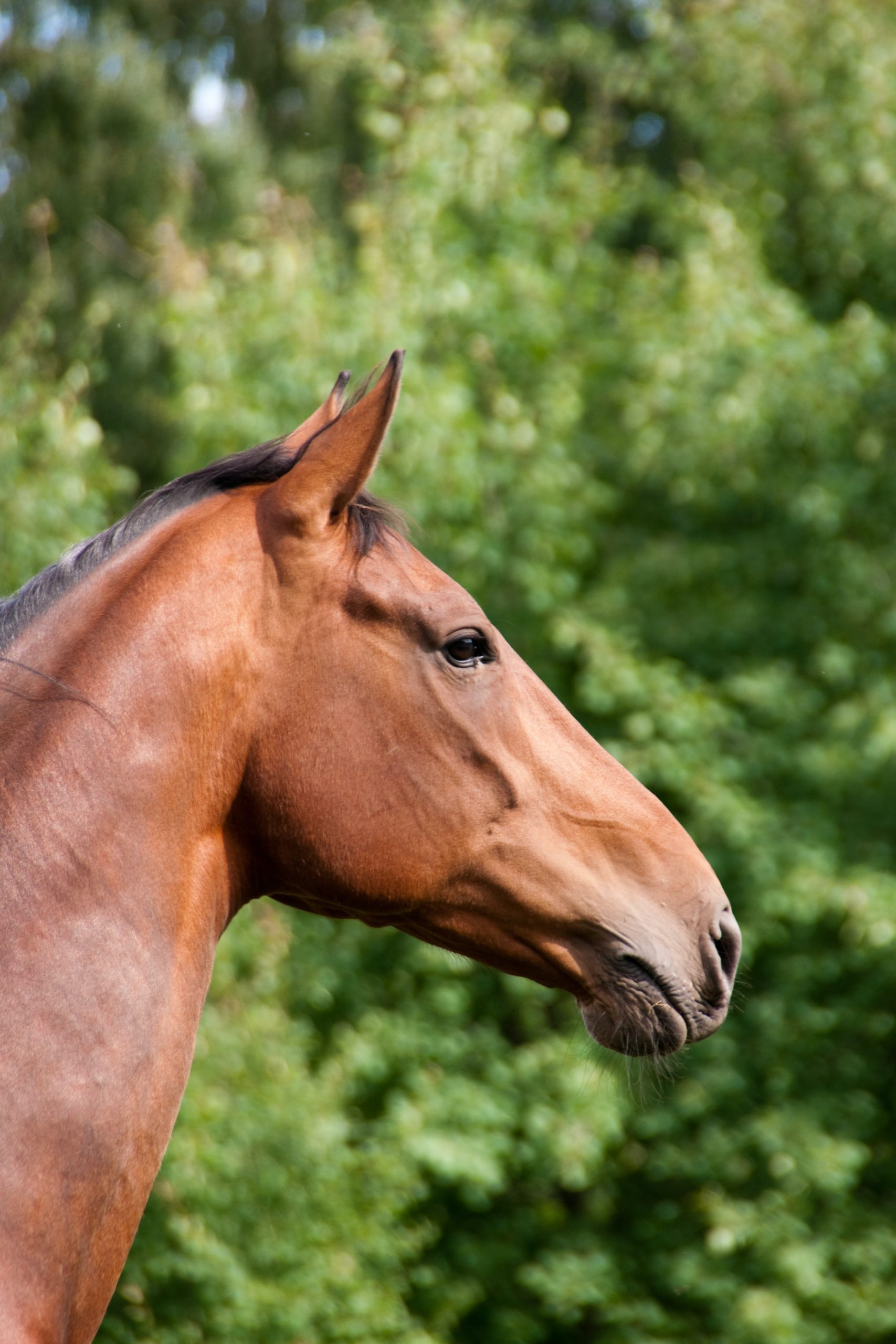 equine first aid course part 2